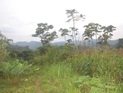Zona Reyna hills